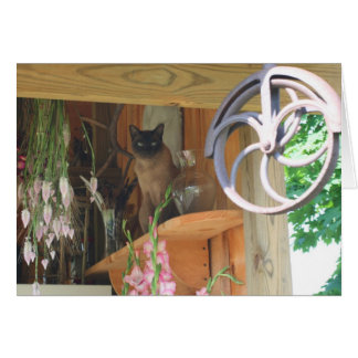 Siamese Cat Posing Photography Card #2