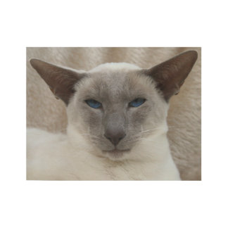 Siamese Cat Wood Poster