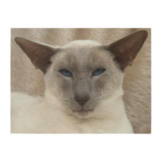 Siamese Cat Wood Print