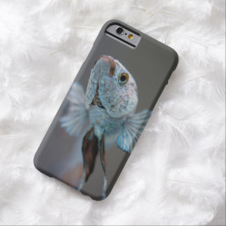 Siamese Fighter iPhone 6 case