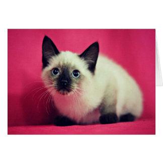 Siamese Kitten Blank Inside Card
