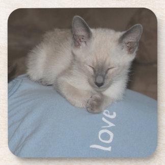 Siamese kitten  coaster