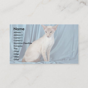 Siamese, lilac point business card