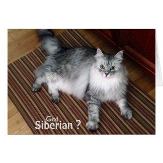 Siberian Cat Blank Note Card