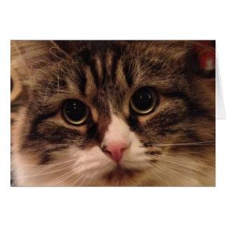 Siberian Cat Close Up Note Card