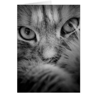Siberian Cat Eyes Blank Card