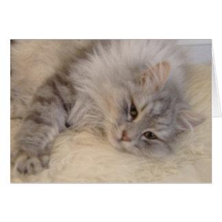 Siberian Cat Greetings Card