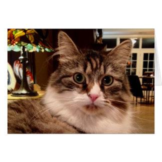 Siberian Cat Note Card
