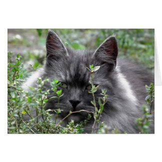 Siberian | Cat Portrait Card