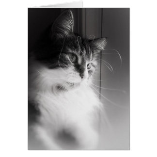 Siberian Cat Thinking of You Card