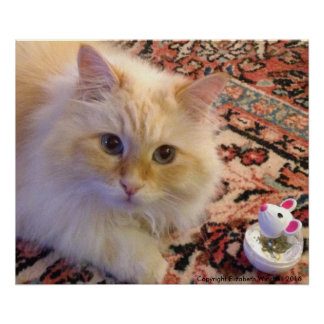 Siberian Forest Cat & Toy Poster