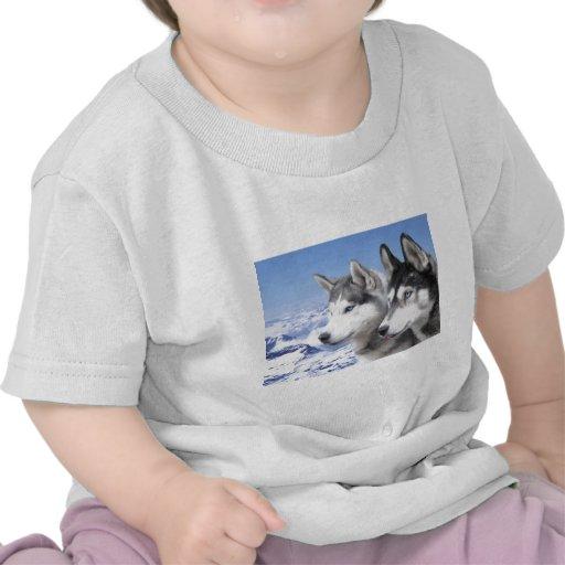 Siberian Huskies Tshirt