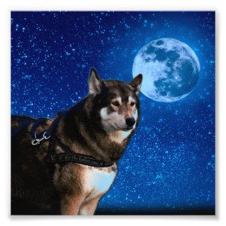 Siberian husky and the Blue Moon Photo Art