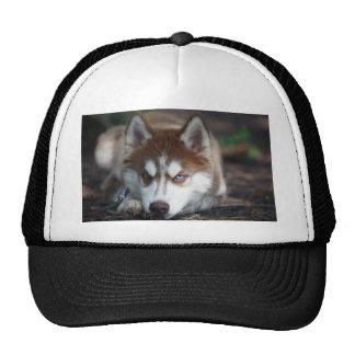 Siberian Husky Blue Eyes Dog Hat