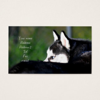 Siberian Husky business cards