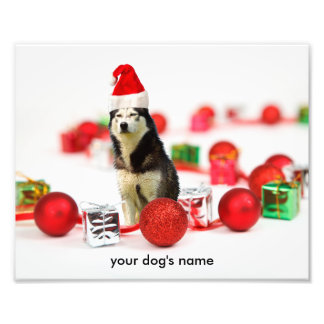 Siberian Husky Christmas Ornament photo print