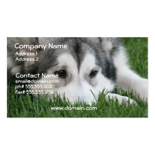 Siberian Husky Dog Business Card