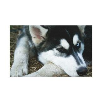 Siberian Husky Dog Canvas Prints