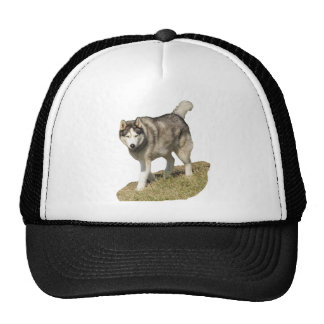 Siberian Husky Dog Mesh Hats