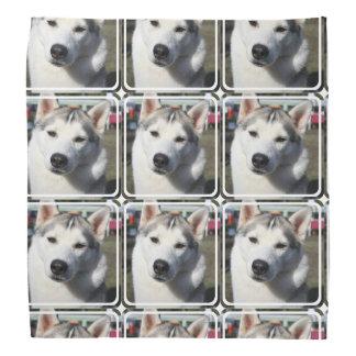 Siberian Husky Dog Photo Bandana