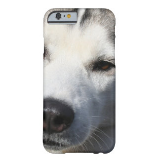 Siberian Husky Dog Photo Barely There iPhone 6 Case