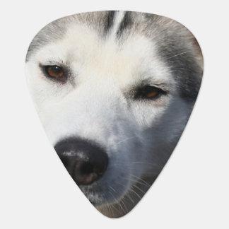 Siberian Husky Dog Photo Guitar Pick