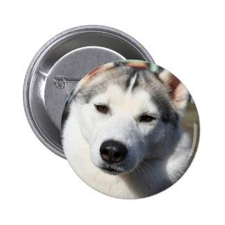 Siberian Husky Dog Round Button