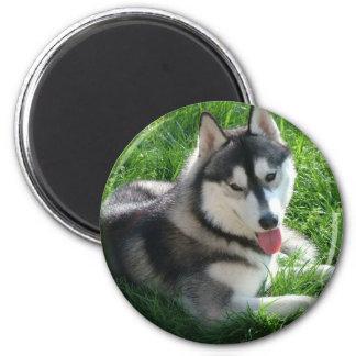 Siberian Husky Dog Round Magnet