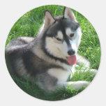 Siberian Husky Dog Sticker