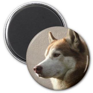 Siberian Husky Dogs 6 Cm Round Magnet