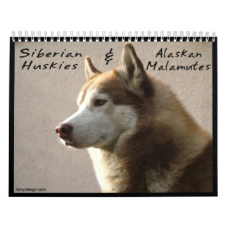 Siberian Husky Dogs Wall Calendar