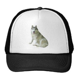 Siberian Husky Hat