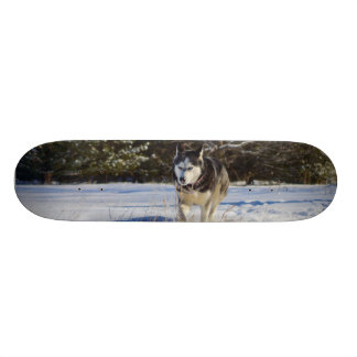 Siberian Husky In The Snow 18.1 Cm Old School Skateboard Deck