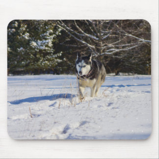 Siberian Husky In The Snow Mouse Pad