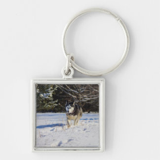 Siberian Husky In The Snow Silver-Colored Square Key Ring
