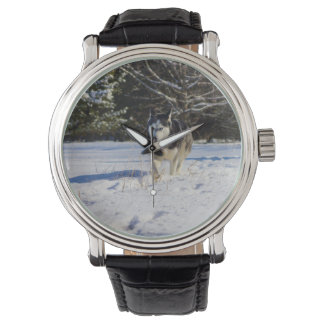 Siberian Husky In The Snow Wrist Watches