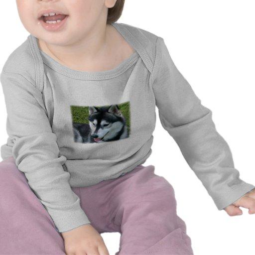 Siberian Husky Infant T-Shirt