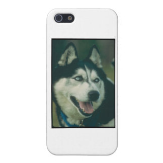 Siberian Husky iPhone 5 Cover