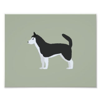 Siberian Husky Photo Print