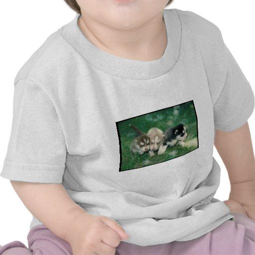Siberian Husky Puppies Shirts