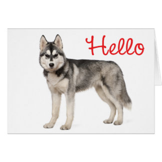 Siberian Husky Puppy Dog  Red Hello Love Miss You Card