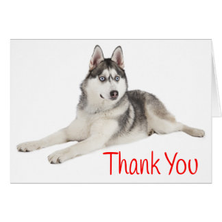Siberian Husky Puppy Dog Red Thank You - Blank Card