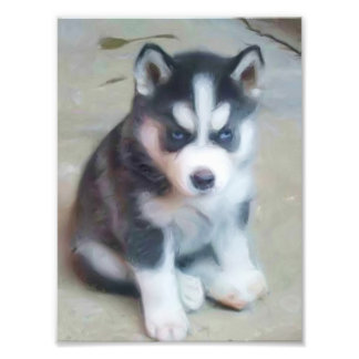 Siberian Husky puppy Photo Print