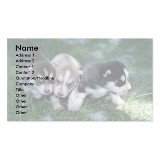 Siberian Husky pups, 3 weeks Pack Of Standard Business Cards