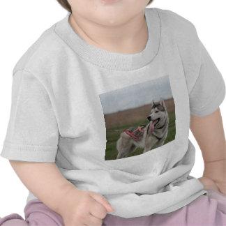 Siberian Husky sled dog T Shirts