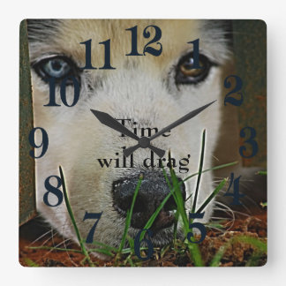 Siberian Husky waiting patiently Square Wall Clock