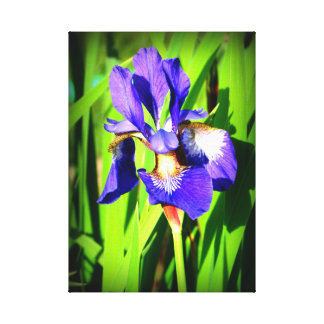 Siberian Iris Stretched Canvas Print