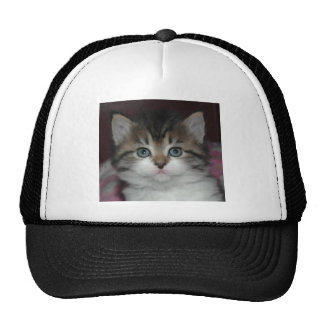 Siberian Tabby/White Kitten Cap