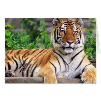 Siberian Tiger Blank Card