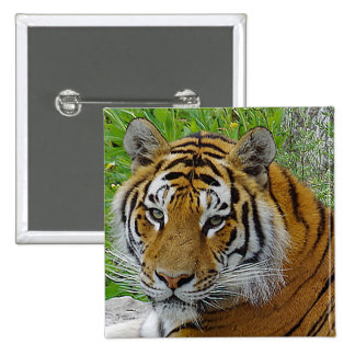 Siberian Tiger Closeup Photo of Face 15 Cm Square Badge